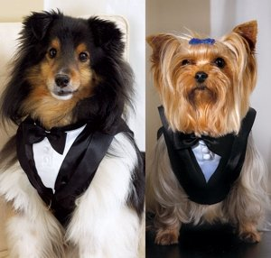 Pet or Dog Wedding Tuxedo image