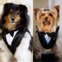 Pet or Dog Wedding Tuxedo